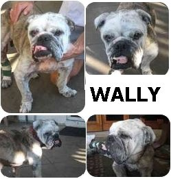 Wally - montage