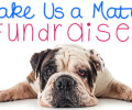 "SCBR SUMMER ""MAKE US A MATCH"" FUNDRAISER"