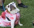 Photos from Howl-O-Ween 2017